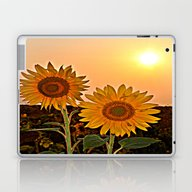Couple Of Sunflowers Laptop & iPad Skin