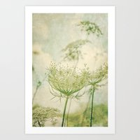 Sanctuary -- White Queen Anne's Lace Meadow Wild Flower Botanical Art Print