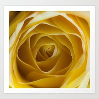 Golden Folds Art Print