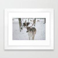Snowy Nose Framed Art Print