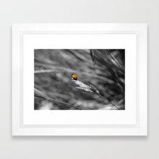 Fly Away Home Framed Art Print