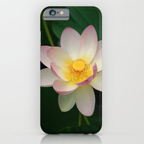 Lotus Blossom in Full Bloom iPhone & iPod Case
