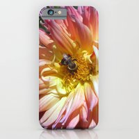 iPhone Cases featuring The Apricot Dahlia And The Bee by minx267