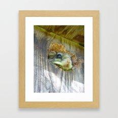 flying squirrel 2016 Framed Art Print