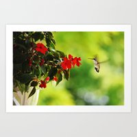 Hummingbird At The Flowe… Art Print