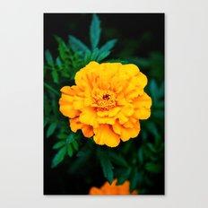 Tangerine Beauty Canvas Print