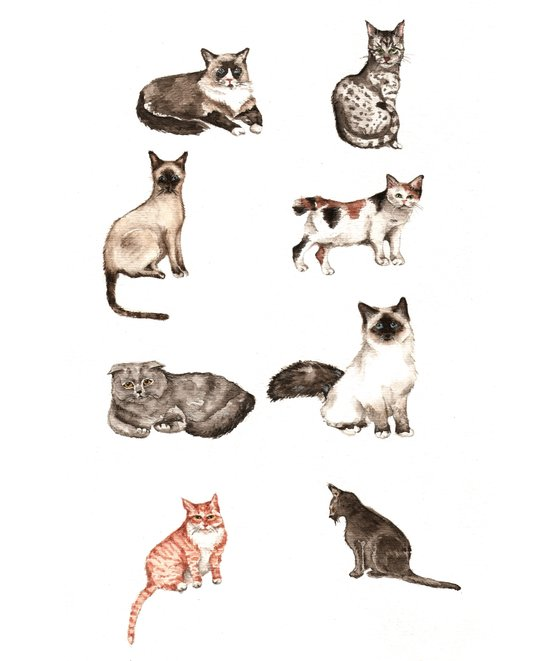 For cat lovers - watercolor of different cat breeds Art Print