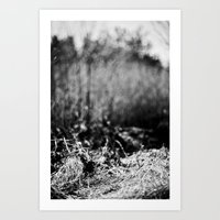 nesting grounds. Art Print