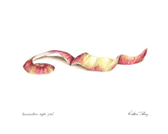 Gravenstein apple peel Art Print