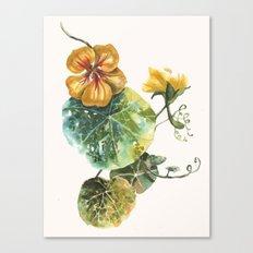 Nastursium, flower, flower paintings, garden lover gift Canvas Print