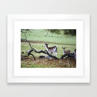 Deer in the Woods Framed Art Print