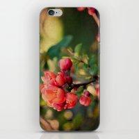 Red&Green iPhone & iPod Skin