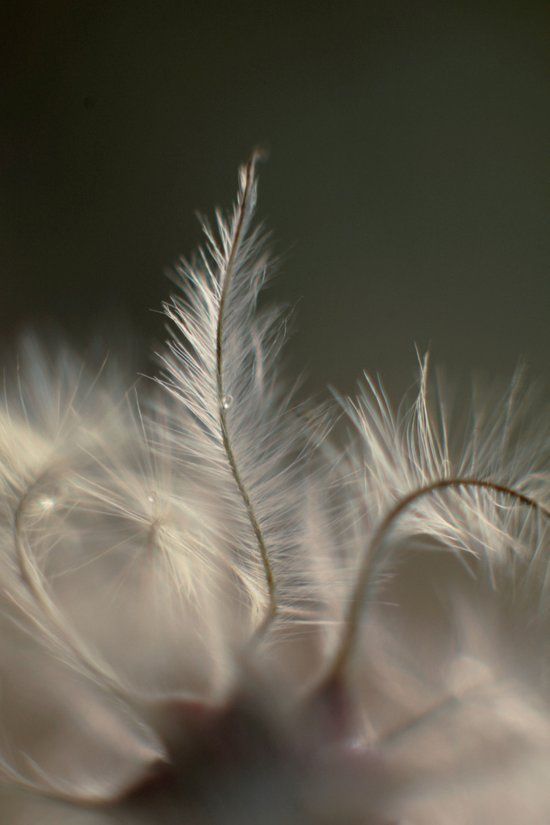Feathery Frond Art Print
