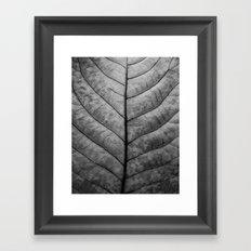 Leaf Veins Framed Art Print