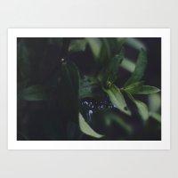 Summer Dew V.01 Art Print