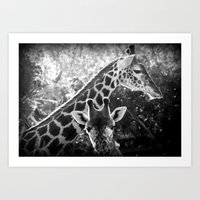 two giraffes Art Print