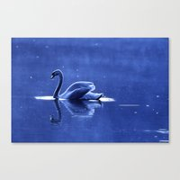blue swan Canvas Print
