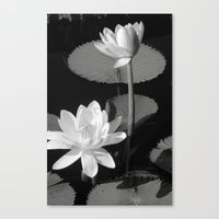 Black & White Lilypad Canvas Print