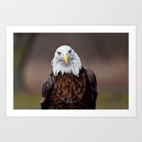 Bald Eagle Face Art Print