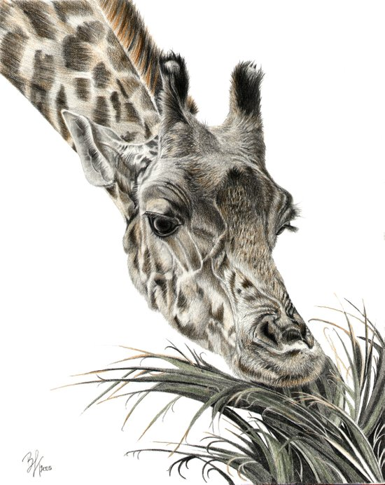 Giraffe - A Long Munch Art Print