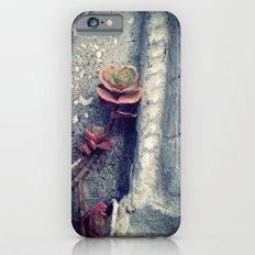 Suculent flowers iPhone 6 Slim Case