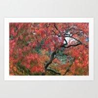 Japanese Maple Tree Art Print