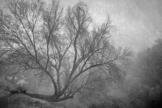 Morning in the fog. M Art Print