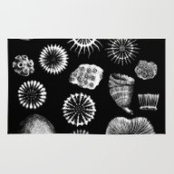 Fossil Corals Rug