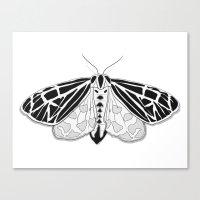 Virgin Tiger Moth Canvas Print