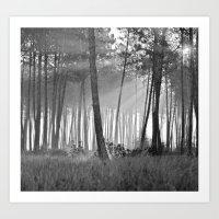 lumineuse brume Art Print