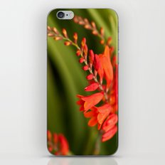 Blooming Reds iPhone & iPod Skin