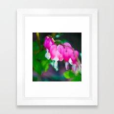 Heart of My Hearts.  Bleeding Hearts Photograph.  Macro Photography Framed Art Print