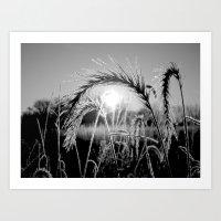 Wheat Sunrise B&W Art Print