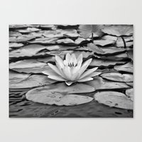 The Subtlety of Peace Canvas Print