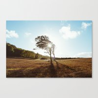 Standing in the Sun Canvas Print