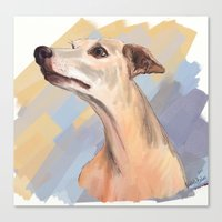 Whippet face Canvas Print