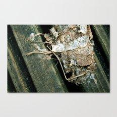 Skeleton Leaf Canvas Print