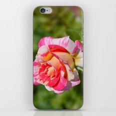 Rose 1 iPhone & iPod Skin