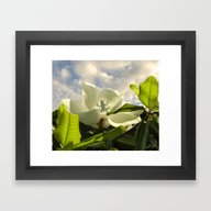 Framed Art Print featuring Tree Frog & Magnolia by Spadecaller