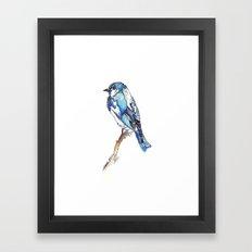 Mountain Bluebird Framed Art Print