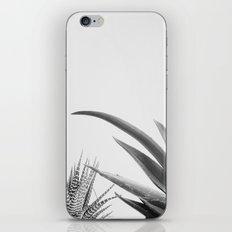 Succulents II iPhone & iPod Skin