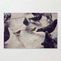 I envy birds Canvas Print
