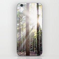 Sunburst Through the Redwoods iPhone & iPod Skin