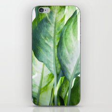 Tropic Abstract  iPhone & iPod Skin