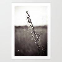 Prairie Wild Art Print