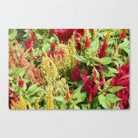 DC Flowers Canvas Print