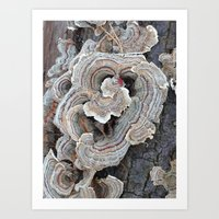Fungi I Art Print