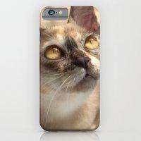 Study Of A Cat iPhone 6 Slim Case