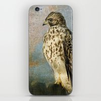 On The Fence - Juvenile Red Shouldered Hawk iPhone & iPod Skin