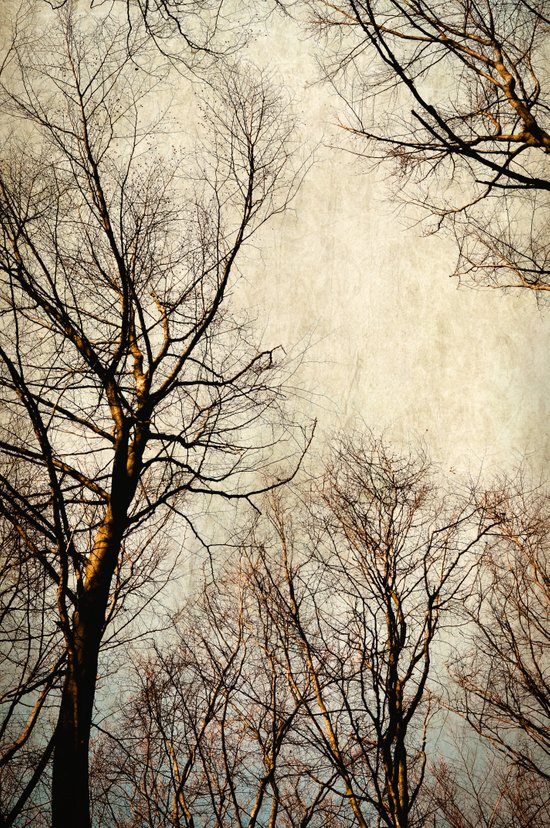 paint the sky with branches Canvas Print